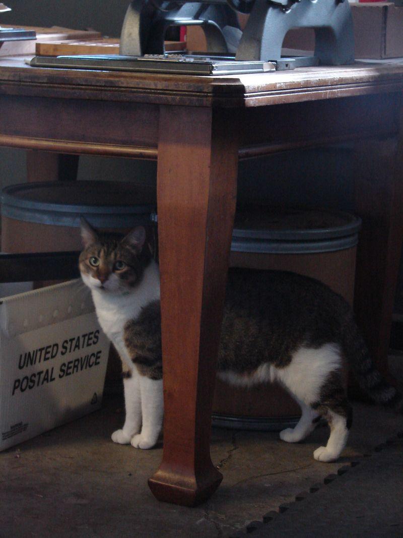 Print Shop Cat 015
