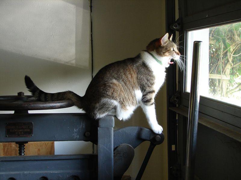 Print Shop Cat 038